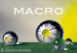 Macro | Inspiration