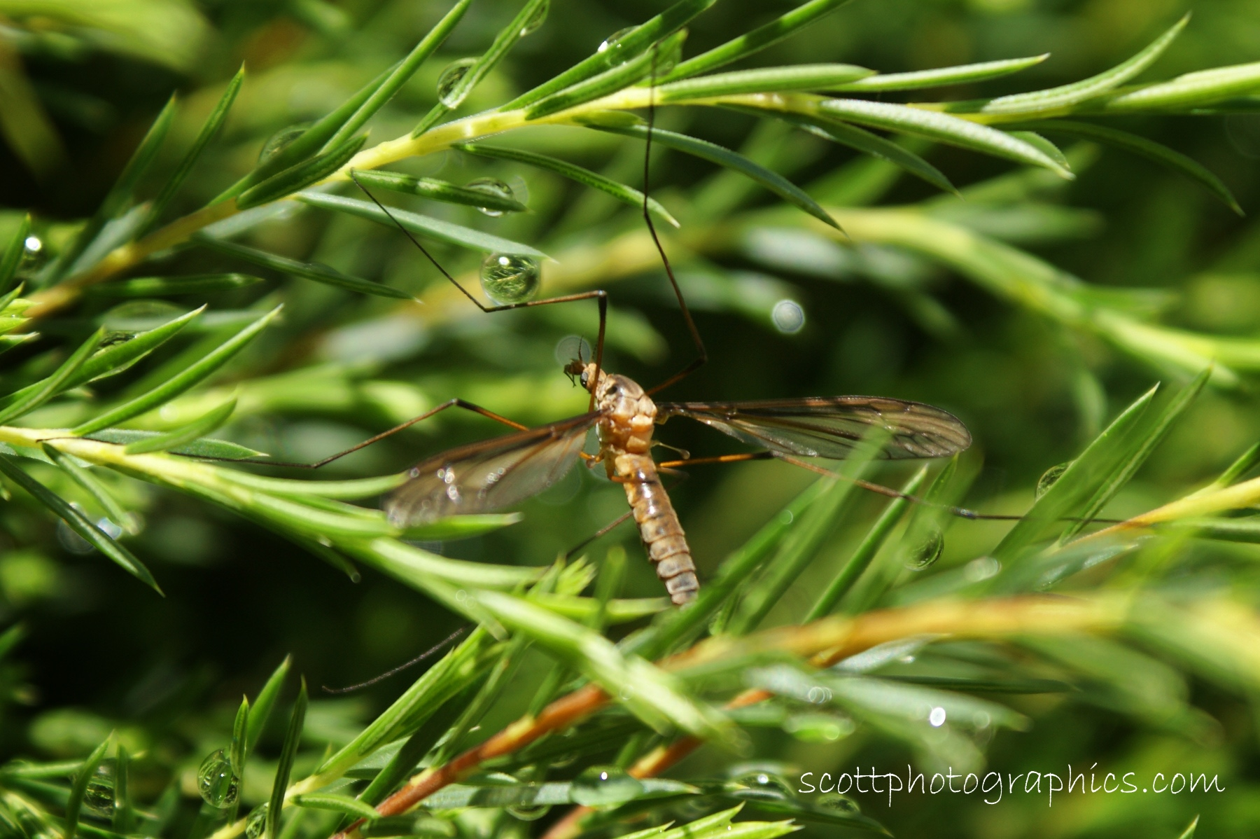 http://www.images.scottphotographics.com/shot-of-the-day/%2310/insect-among-water-droplets.jpg