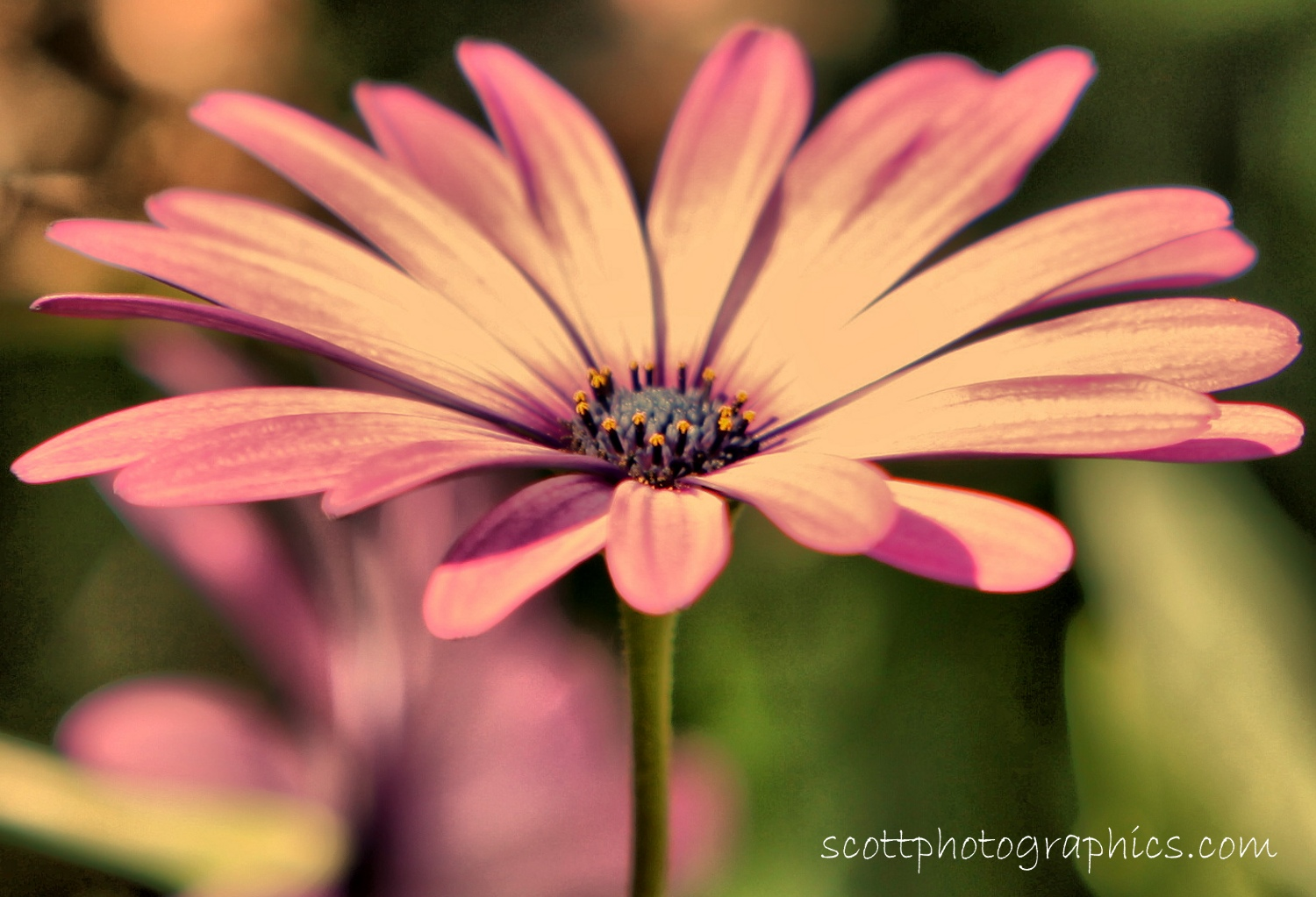 purple-flower-macro-HDR-2.jpg