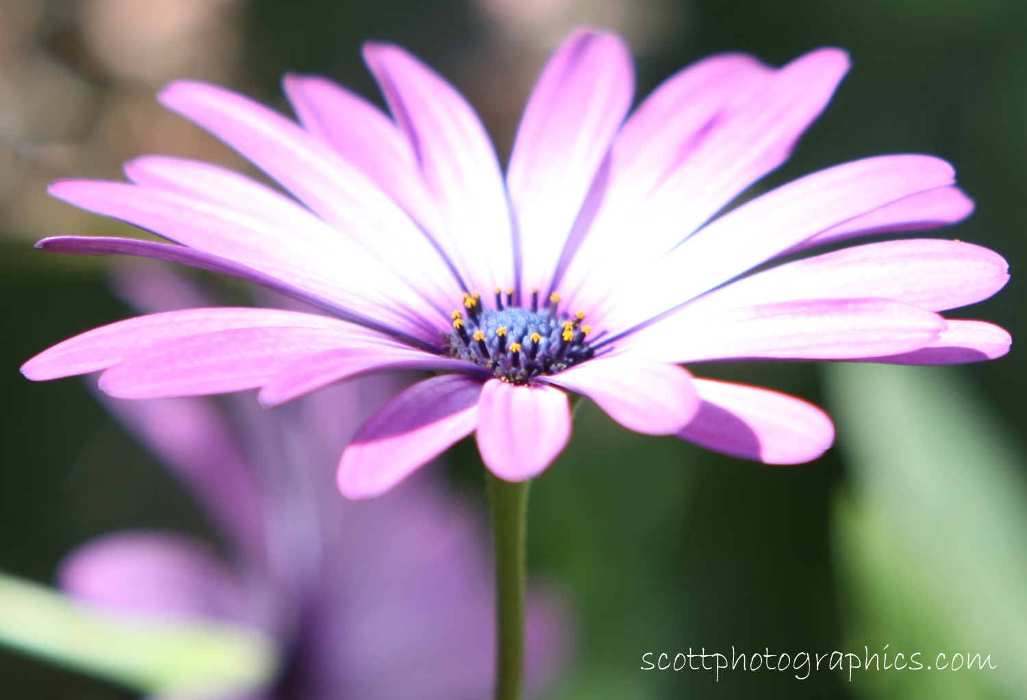 purple-flower-macro.jpg