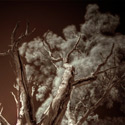 HDR Infrared Gum Tree