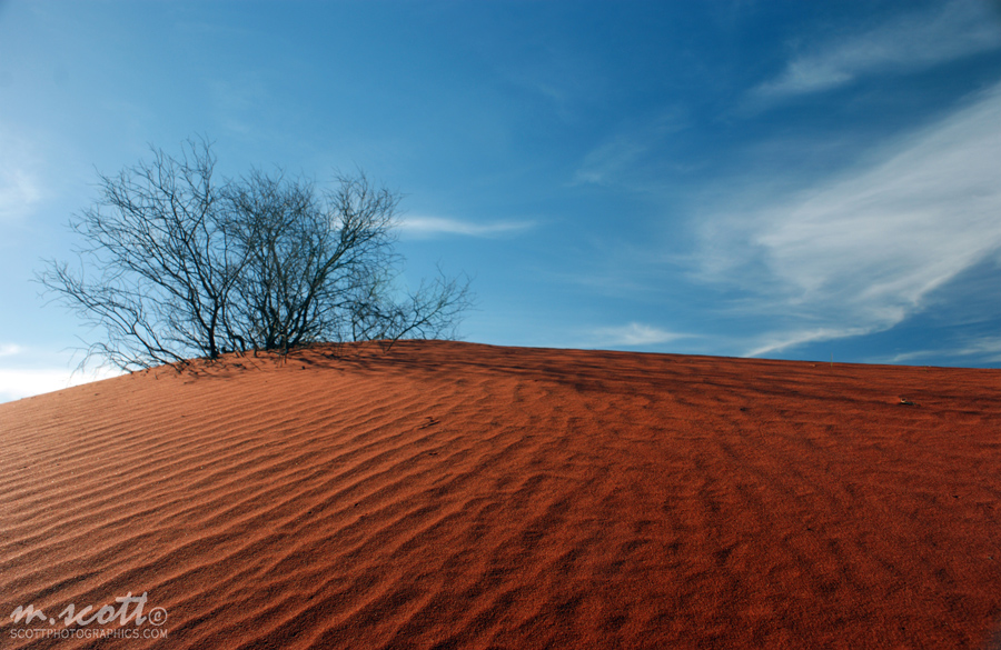 Sand Dune - Outback, Northern Territory