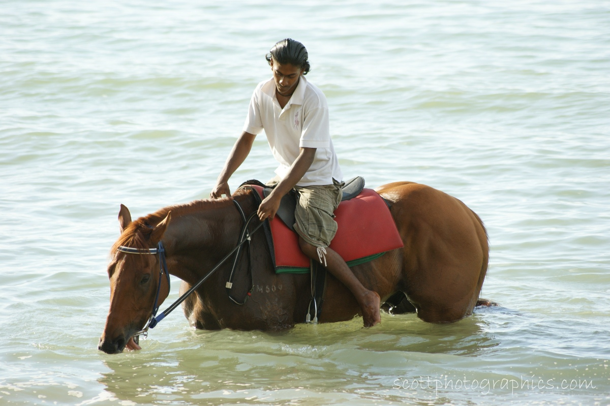 http://www.images.scottphotographics.com/shot-of-the-day/%237/Horse-and-Owner-cooling-off-Penang-Malaysia01.jpg