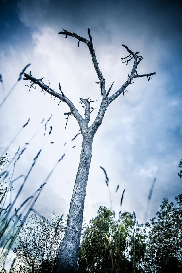 Dead Tree Victoria