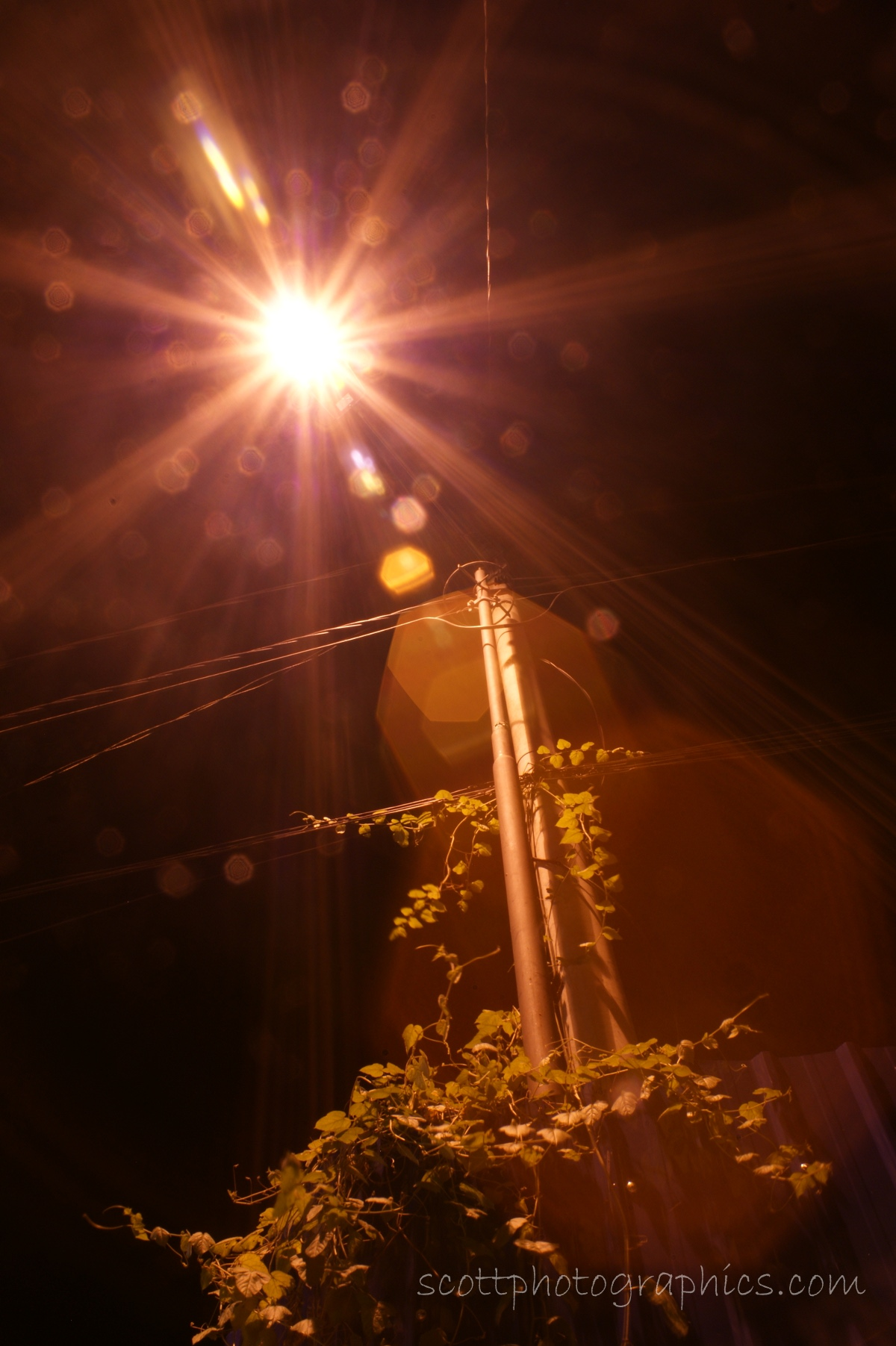 http://www.images.scottphotographics.com/shot-of-the-day/%238/low-pressure-sodium-light-penang-malaysia.jpg
