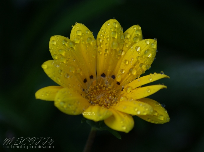using-water-droplets-to-improve-flower-photos-6.jpg