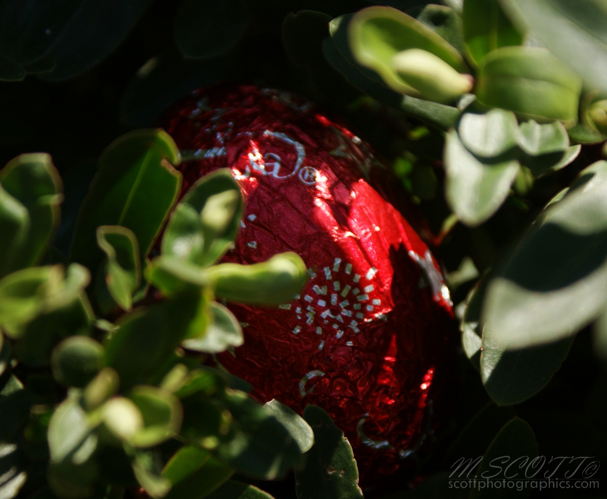 easter-egg-hunt-easter-sunday-2010-2.jpg