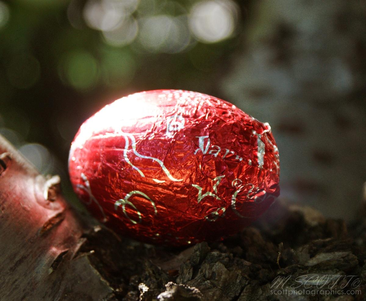 https://www.images.scottphotographics.com/shot-of-the-day/%2324/easter-egg-hunt-easter-sunday-2010-3.jpg