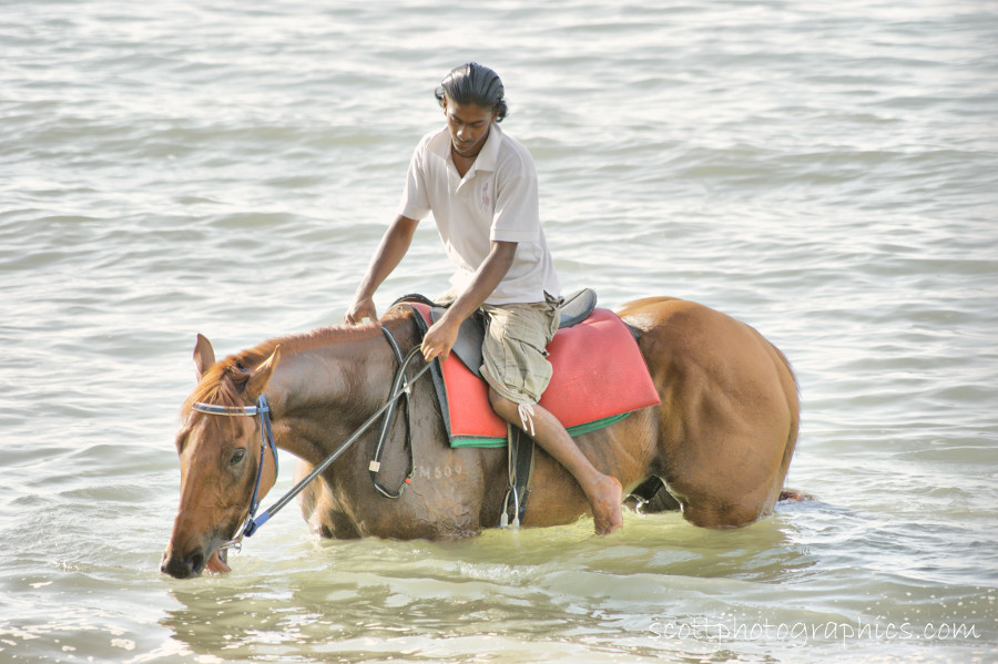 https://www.images.scottphotographics.com/shot-of-the-day/%237/Horse-and-Owner-cooling-off-Penang-Malaysia02.jpg